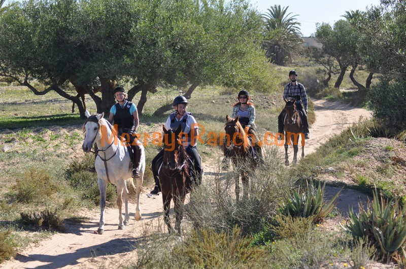 reiten-equitation-riding-horse-djerba