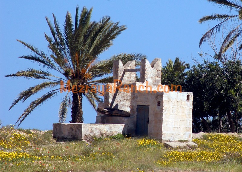 Mezraya-Ranch-Djerba0022