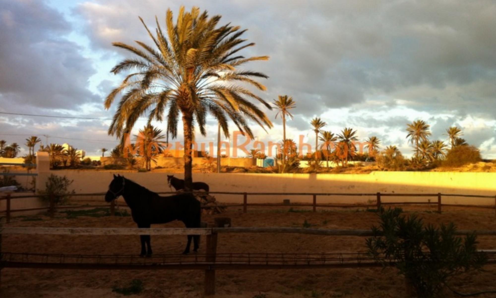 Mezraya-Ranch-Djerba0091