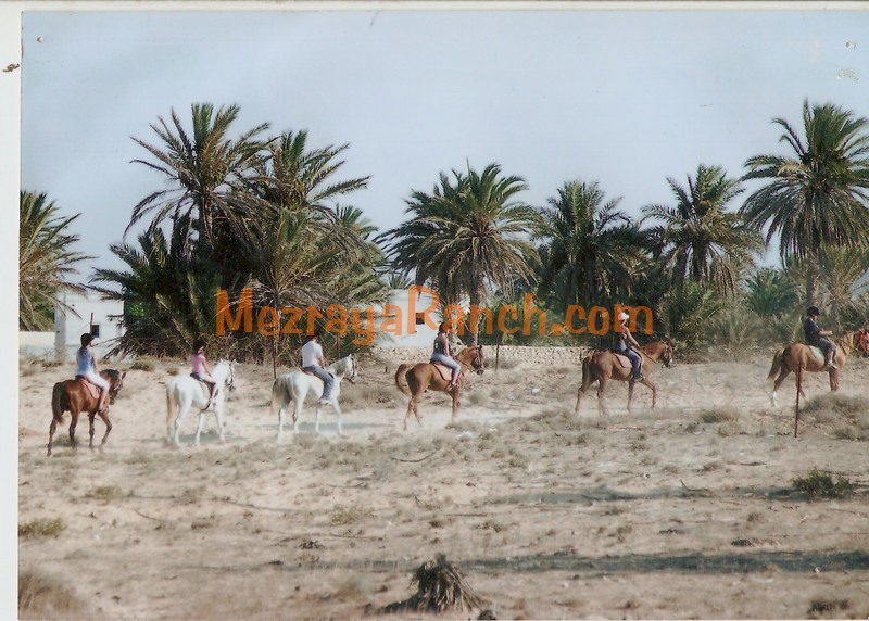 Mezraya-Ranch-Djerba0097