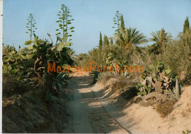 Mezraya-Ranch-Djerba0098