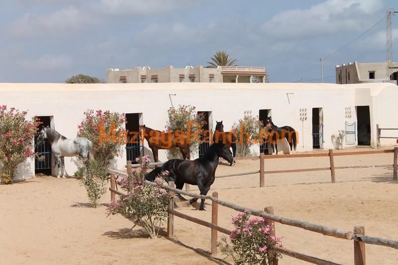 Mezraya-Ranch-Djerba0073