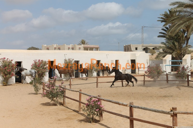 Mezraya-Ranch-Djerba0074