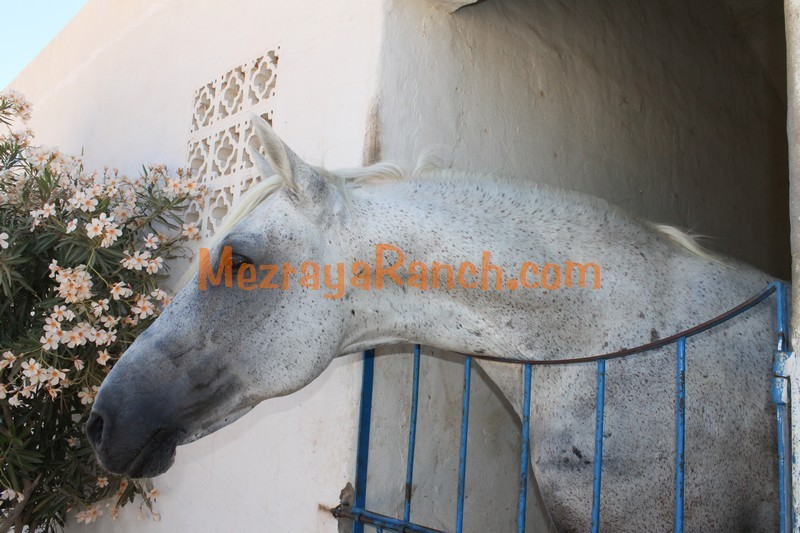Mezraya-Ranch-Djerba0083