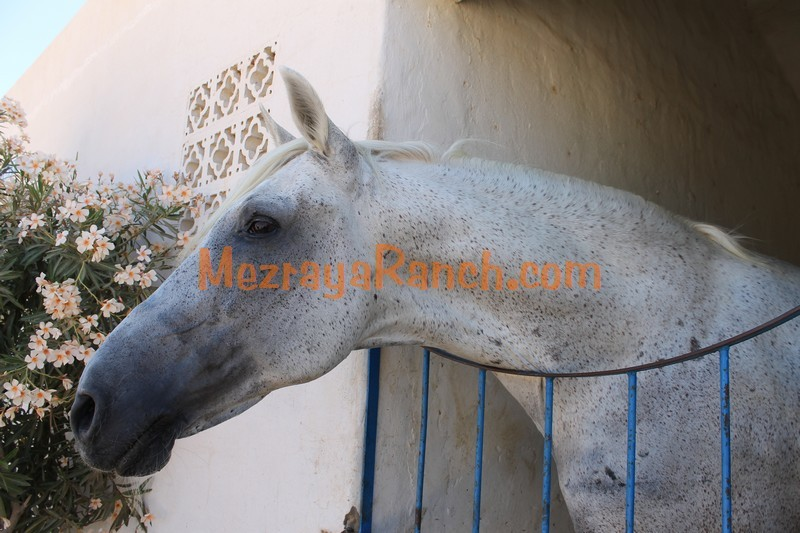 Mezraya-Ranch-Djerba0084