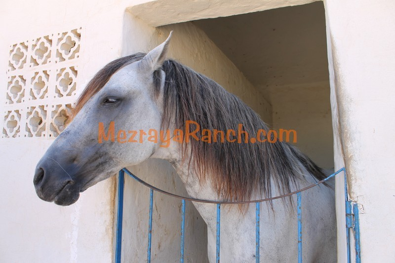 Mezraya-Ranch-Djerba0087