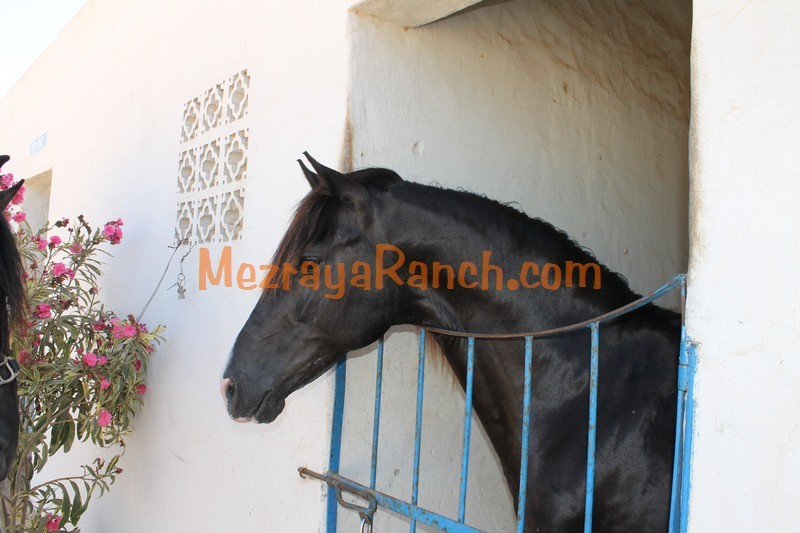 Mezraya-Ranch-Djerba0089