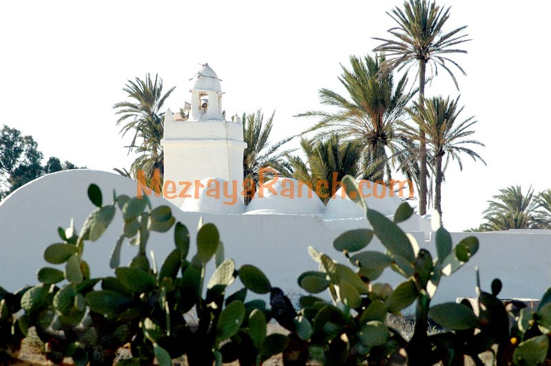 Mezraya-Ranch-Djerba0094